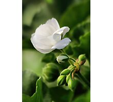 December Bloom Photographic Print