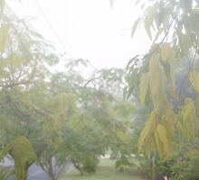 Sunday Street Fog © Vicki Ferrari by Vicki Ferrari