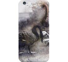 Black Swan Family iPhone Case/Skin