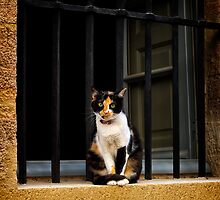 On Guard by Mieke Boynton