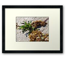 From the Garden of the Sea (3) Framed Print