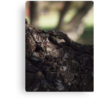 Canberra Tree Canvas Print