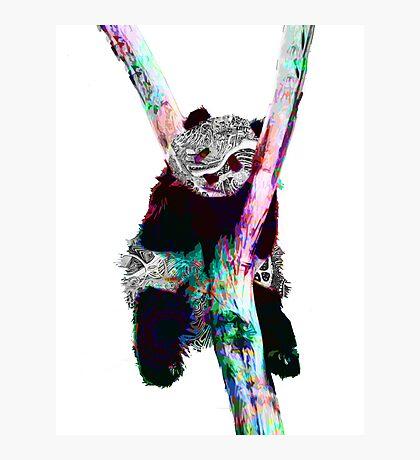 Psychedelic Pandas Photographic Print