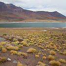 Miniques Lagoon by DianaC