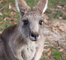 Those Eyes - Halls Gap by Andrew Dodds
