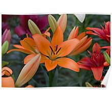 Orange Lilly at the RHS Chelsea Flower Show Poster