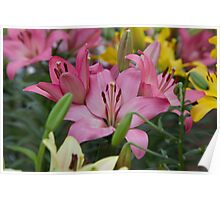 Pink Lillies at the RHS Chelsea Flower Show Poster