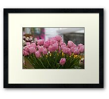 Pink tulips at the RHS Chelsea Flower Show Framed Print