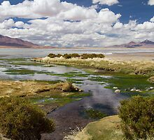 Tara Salt Flat coloured landscape by DianaC