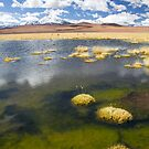 Tara Salt Flat coloured landscape II by DianaC