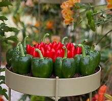 Red & green peppers on display at RHS Chelsea Flower Show by Keith Larby