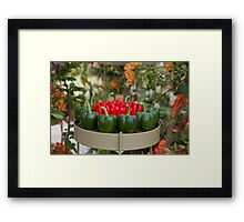 Red & green peppers on display at RHS Chelsea Flower Show Framed Print