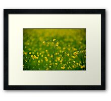 Field of yellow flowers Framed Print