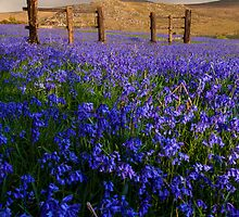 Dartmoor 'Belle by AndyCosway