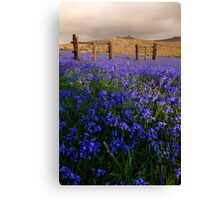 Dartmoor 'Belle Canvas Print