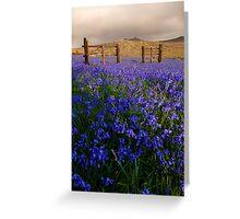 Dartmoor 'Belle Greeting Card