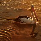 Golden Pelican by myraj