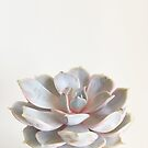 Pink Succulent by Cassia Beck