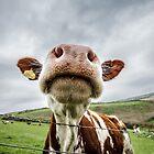 Silly Cow by Heidi Stewart