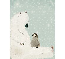 penguin and bear  Photographic Print