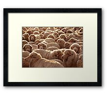 Sheep from Peninsula Valdes Framed Print