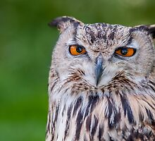 Owl against grass by cuttlefish714