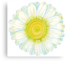 camomile flower Canvas Print
