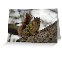 It's hard to be Regal up a tree... Greeting Card