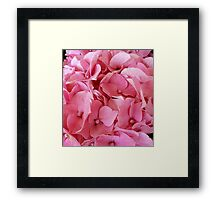 A Bed of Pink Framed Print