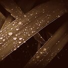 Tear Drops by shelleybabe2