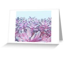 Sweet Succulents Greeting Card