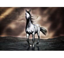 Beautiful Horse  Photographic Print
