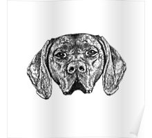 Pointer Dog Ink Drawing Poster