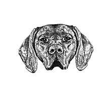 Pointer Dog Ink Drawing Photographic Print