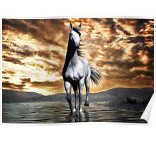 Beautiful Horse 2  Poster