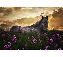 Beautiful Horse 4 Photographic Print