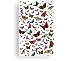 Beautiful Butterflies Canvas Print