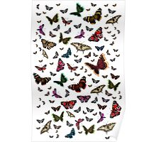 Beautiful Butterflies Poster