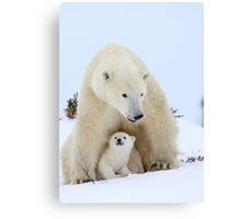 Mother plar bear protecting her cub Canvas Print