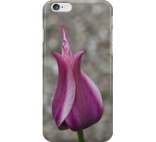 An Elegant Vibrant Pink Tulip in a Pebble Garden iPhone Case/Skin