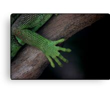 Iguana ~ these feet have been places Canvas Print