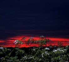 Cow parsley at daybreak by KatDoodling