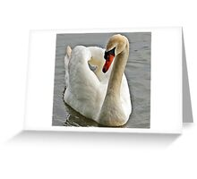 Swan Greeting Card