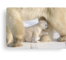Better sheltering in Mom's legs! Canvas Print