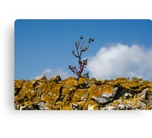 Life on the Wall Canvas Print