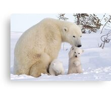 Mother polar bear & her two cubs Canvas Print