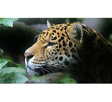 Portrait of a Jaguar Photographic Print