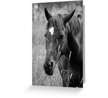Horse Portrait - BW Greeting Card