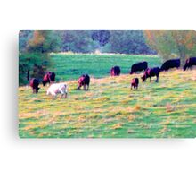 Cows on Parade! Canvas Print