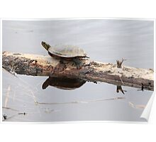 Turtle Reflection Poster